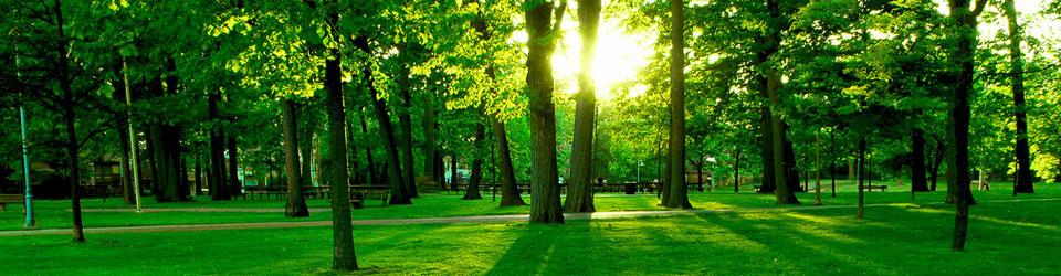 A park at sun rise